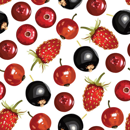drupe: Vector illustrations of pattern seamless of ripe berries
