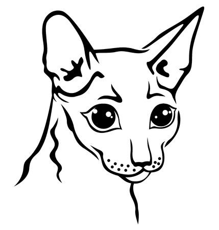 cornish rex: Vector illustrations of contour Cornish Rex cat muzzle