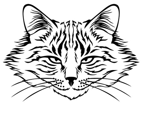 flurry: Vector illustrations of contour image of muzzle flurry harmful cat Illustration