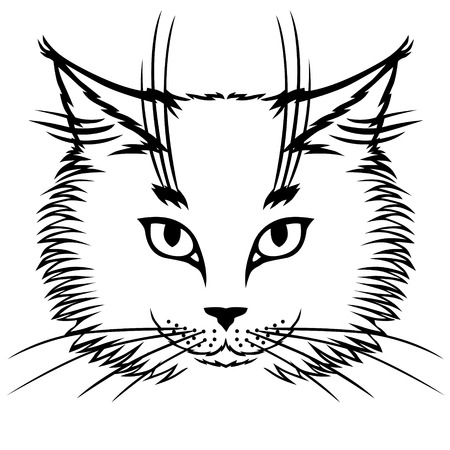 flurry: Vector illustrations of contour image of muzzle flurry cute cat