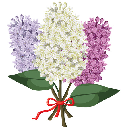 fragrant bouquet: Vector illustrations of  bouquet of multicolored three branches of lilac