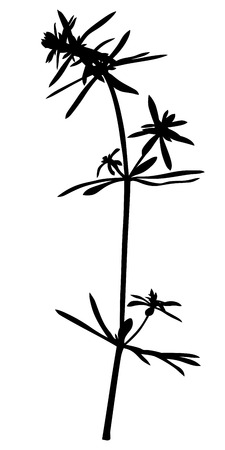 nature vector: Vector illustrations of silhouette grass plant