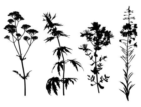 Vector illustrations of medicinal herbals flower silhouette set Illustration