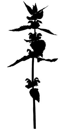 meadow flower: Vector illustrations of silhouette meadow flower