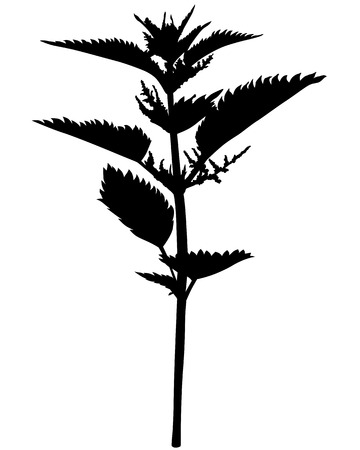 "nettle: Vector illustrations of silhouette nettle ""Urtica urens"" flower"