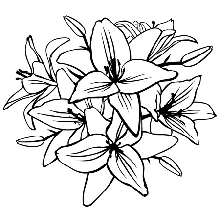 Vector illustrations of contour lily flower and bud