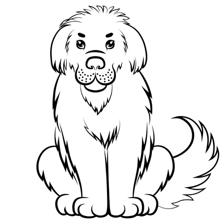 newfoundland: Vector illustrations of contour big furry dog Illustration