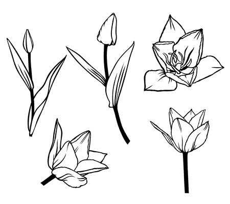 contour: Vector illustrations of contour beautiful tulip flower set Illustration
