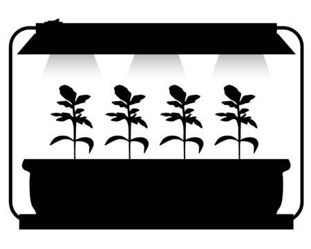 lighting: Vector illustrations of adaptations seedling lighting