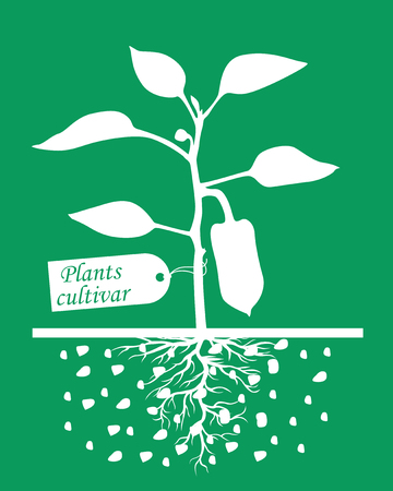 sprouting: Vector illustrations of Set of silhouettes of pepper plants with label cultivar on green background