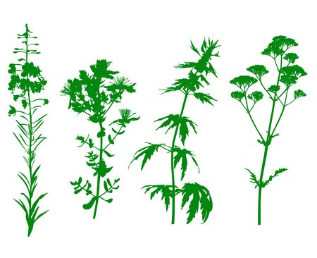 herbals: Vector illustrations of green medicinal herbals flower silhouette set isolated on white background Illustration