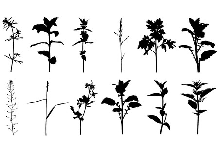 ear bud: Vector illustrations of set silhouette summer wild herbals plants