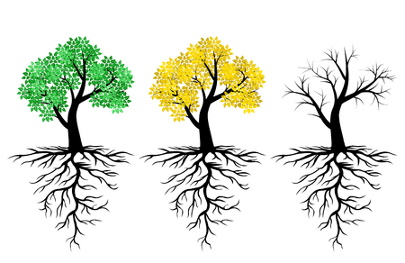 Vector illustrations of icon tree with green leaves and roots set. Cycle of tree on the seasons. Tree in summer, autumn and winter Иллюстрация