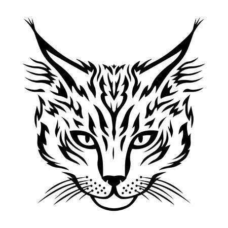 maine: Vector illustrations of Maine Coon cat muzzle. Cat head Illustration