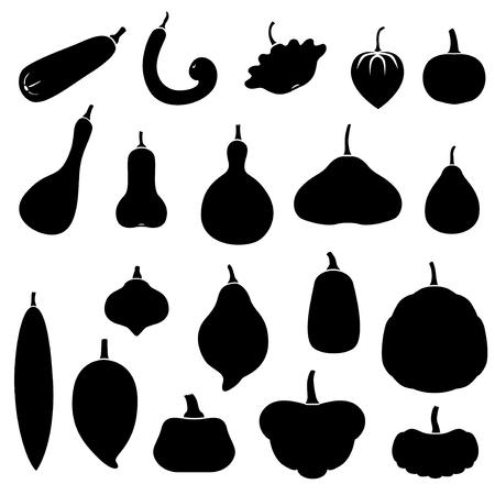 cucurbita: Vector illustrations of silhouette squashes set. Cucurbita pepo, moschata, maxima. Illustration