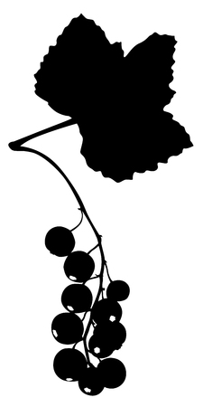 redcurrant: Vector illustrations of silhouette black and white icon of redcurrant Illustration
