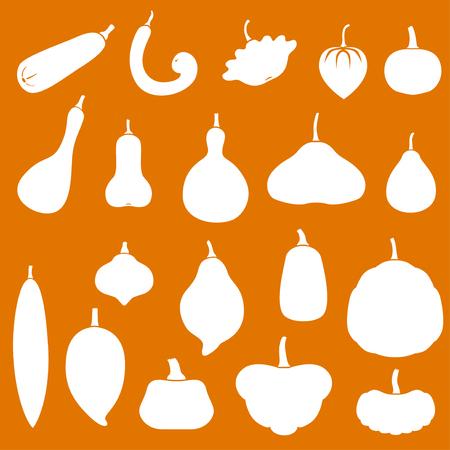 butternut squash: Vector illustrations of silhouette squashes set. Cucurbita pepo, moschata, maxima. Icon on orange background