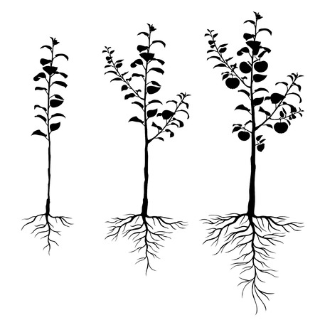 Vector illustrations of silhouette seedling apple trees with roots and fruits set