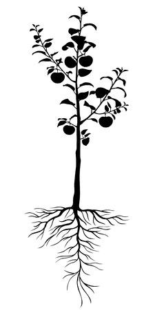 Ilustraciones del vector de la silueta de los árboles de manzana plántulas con raíces y frutos