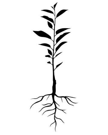 Vector illustrations of silhouette annual seedling cherry tree with leaves and roots