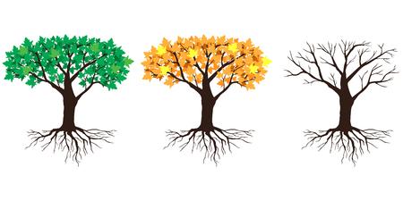 Vector illustrations of big maples tree in summer, autumn and winter Иллюстрация