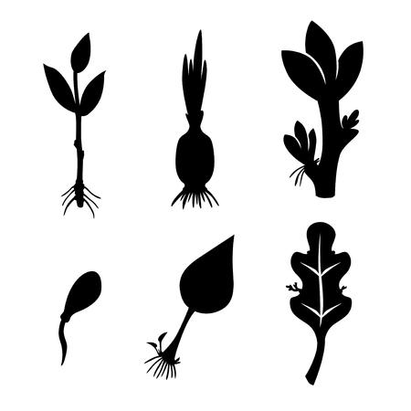Vector illustrations of different plants reproduction set icon Иллюстрация