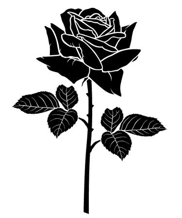 Illustrations vectorielles de la silhouette d'une fleur rose. Variété Diable Rouge