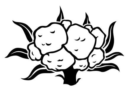 Illustration de l'icône silhouette chou-fleur
