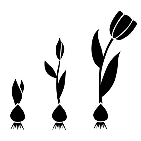 Vector illustrations of sprouts tulips set with bulbs