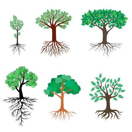 Vector illustrations of set of trees with green leaves