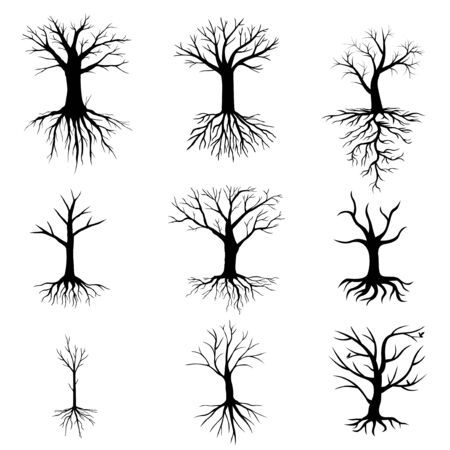 Vector illustrations of trees without leaves set