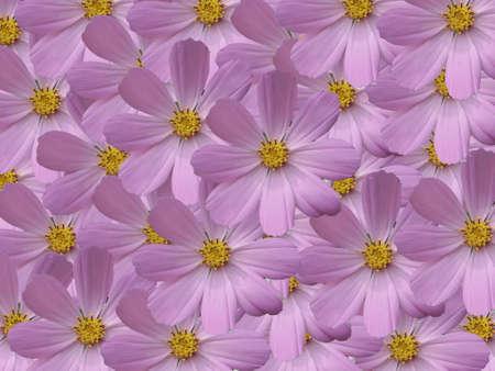 daisywheel: aplique work from flower of the garden daisywheel Stock Photo