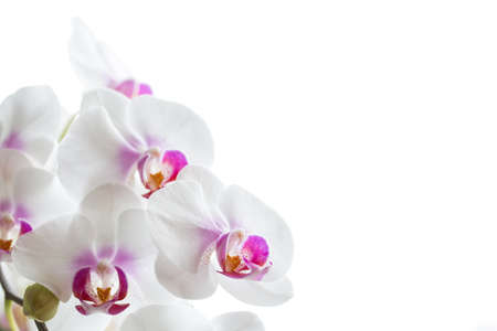 white orchids: white orchids flowers Stock Photo
