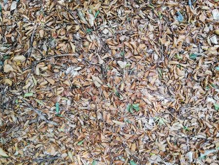 background of autumn ground forest