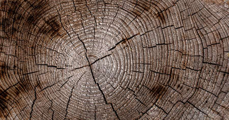 background of wood cut with rings