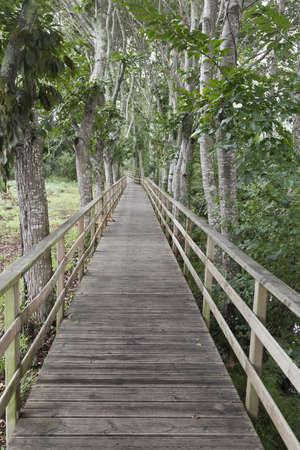 Wooden path through autumm forest. Galicia, Spain Stock Photo - 13323767