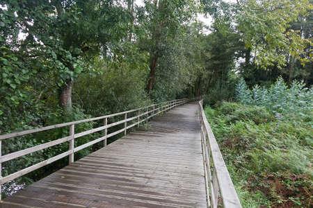 Wooden path through autumm forest  Galicia, Spain
