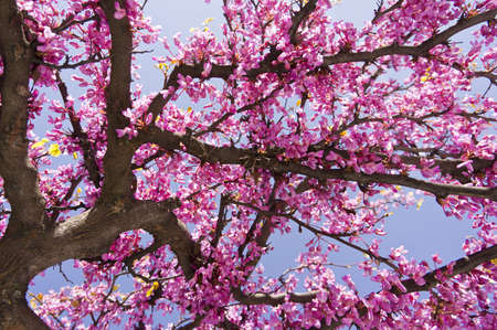 Branch of a blossoming tree on garden background