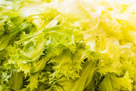 escarola: Cierre de tiro de una escarola verde y amarillo como fondo