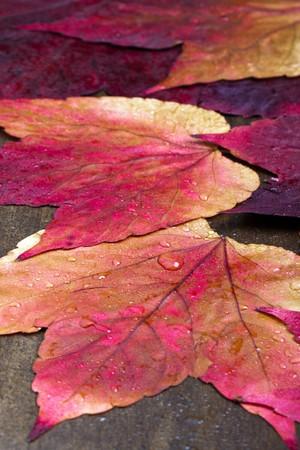 Autumn still life and decoration.