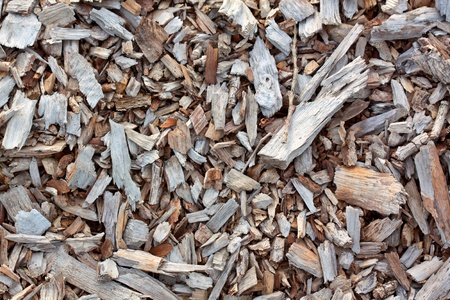 Close up from a forest floor with wood pieces.