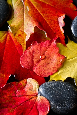 Colorful autumn: Indian summer