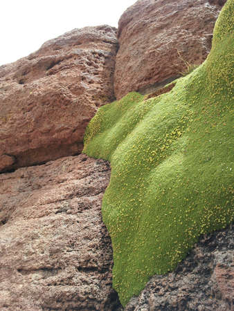 invading: Invading Moss