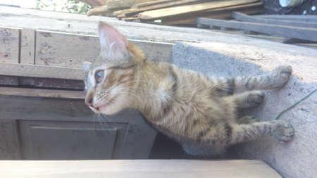 Avid curious kitten on the window