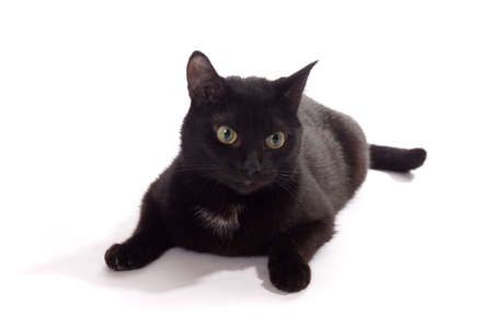 black cat portrait, isolated on the white  Stock Photo - 13057722