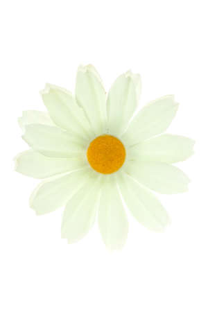 white flower, isolated on white Stock Photo
