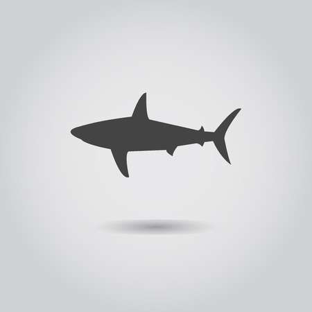 outline drawing of fish: Vector shark Illustration