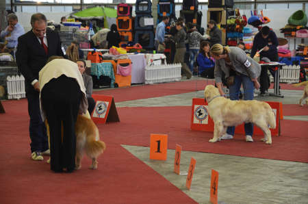 large dog: Zagreb, Croatia. The last day of CACIB - International Dog Show in Zagreb which is being held at the Zagreb Fair, attracted a large number of visitors and exhibitors