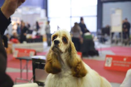held: Zagreb, Croatia. The last day of CACIB - International Dog Show in Zagreb which is being held at the Zagreb Fair, attracted a large number of visitors and exhibitors