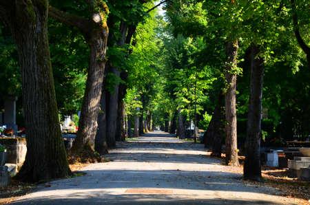 beatiful: Zagreb,Croatia. 20th July, 2014. Beatiful sunshihe morning in cemetary Mirogoj.